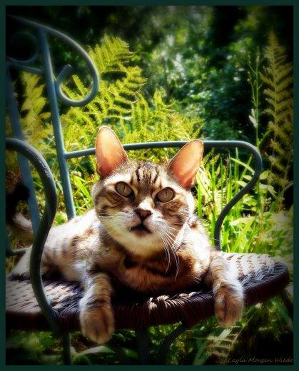Bengal-cat-sun-garden