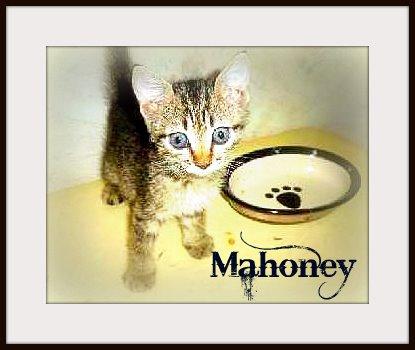 Margs-animals-kitten-mahoney