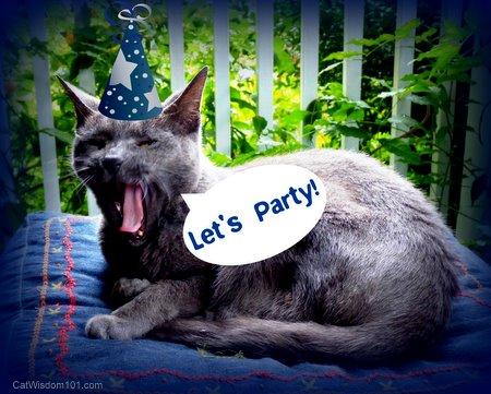 birthday-cat wisdom 101-party