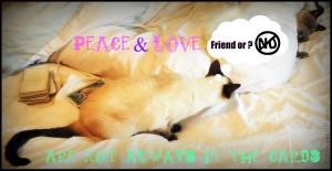 cat aggression peace love tarot behavior