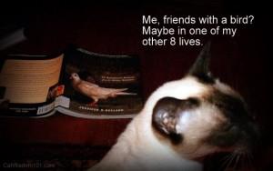 cat-bird-interspecies-humor