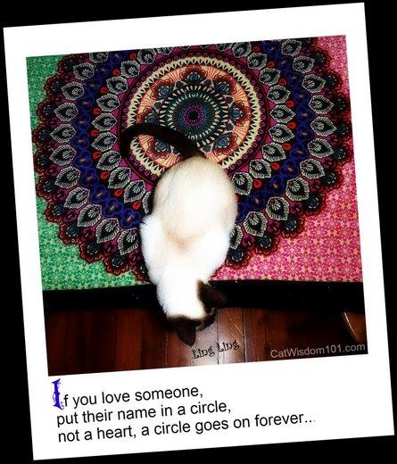 cat-circle-love-mandala