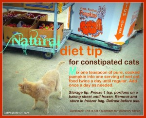 cat-constipation-pumpkin