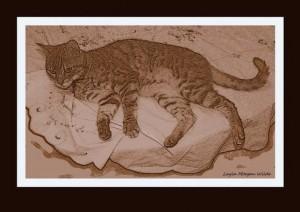 cat-drawing-sepia-bengal-1-300x212 cat-drawing-sepia-bengal-