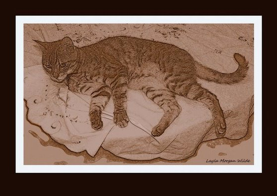 cat-drawing-sepia-bengal-1 Every Cat Is A Masterpiece