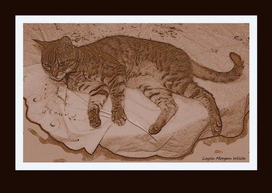 cat-drawing-sepia-bengal-