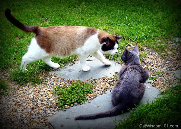 cat-friends-humor