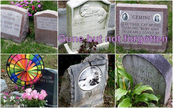 cat-gravestones-cemetery-hartsdale