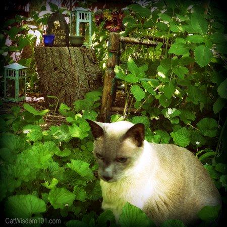 cat-grieving-grave-merlin
