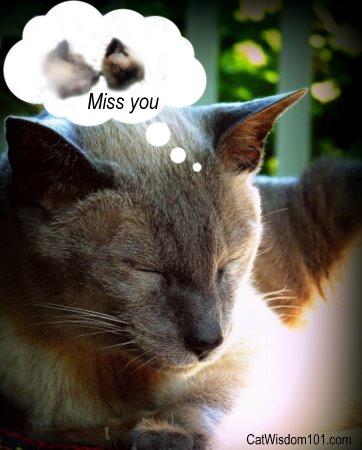 cat-grieving-pet-loss
