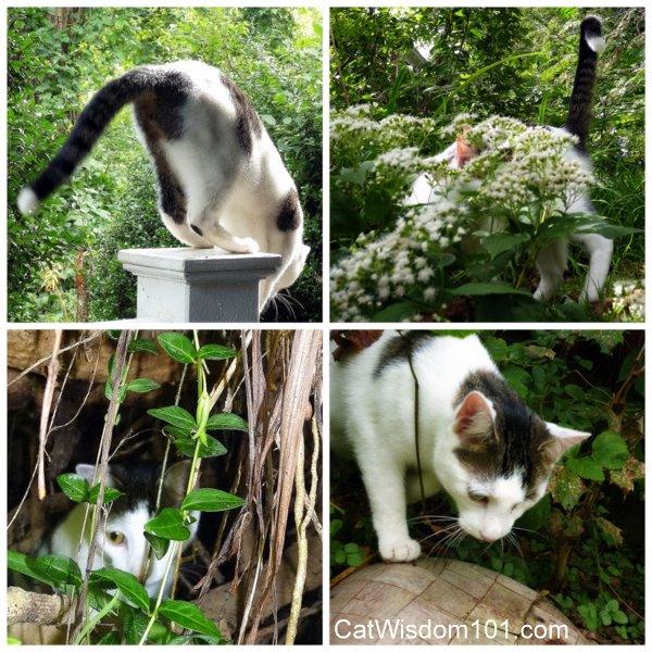 cat-hide-seek-cute Man Cats Gone Wild