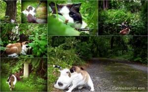 cat-mancats-wild-montage