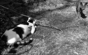 cat-stalking