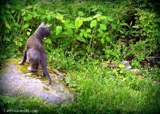 cat-stalking-behavior