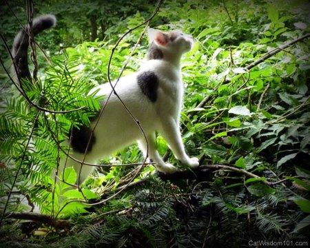 cat wisdom 101-climbing-bushes-odin