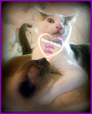 cats-birthday-love