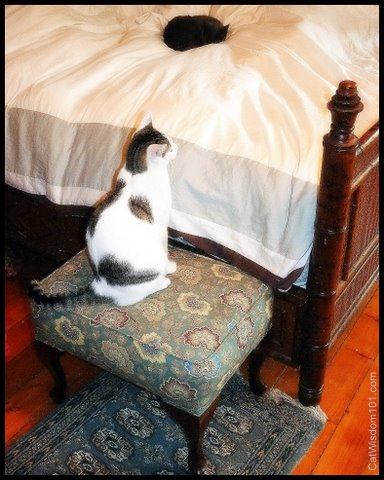 cats-step stool-bed