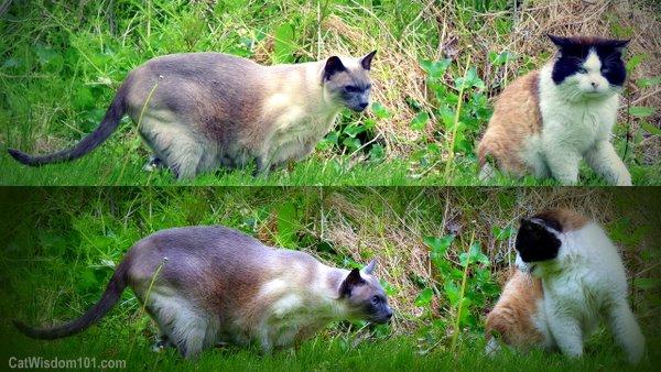 cats-talking-cute