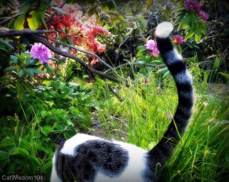 happy cat tail
