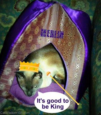 king merlin-cat wisdom101