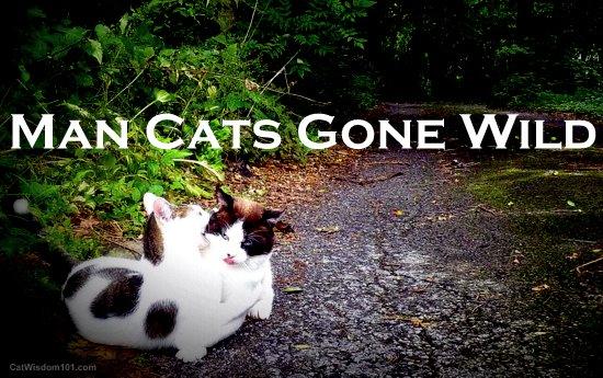 man cats gone wild