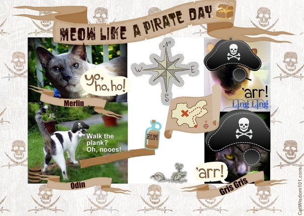meow-pirate-day-cats