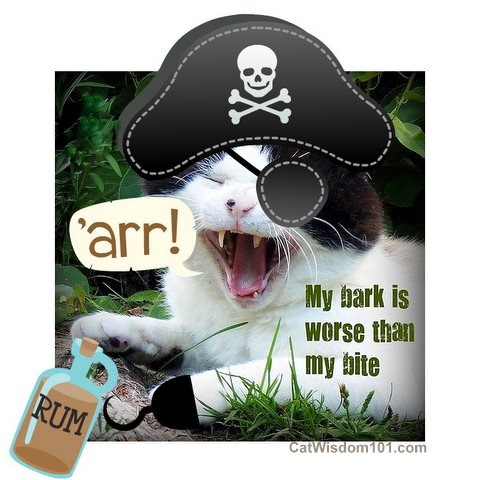 pirate-cat-talk-humor