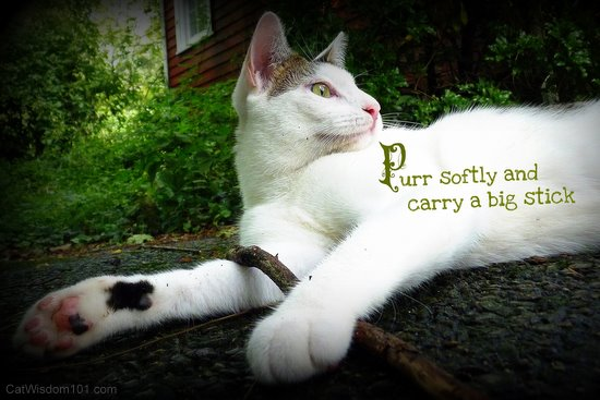 Purr softly and carry a big stick