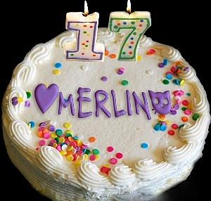 cat wisdom101-birthday 17 cake
