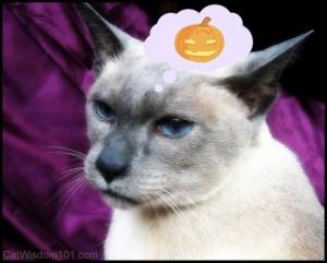 siamese-pumpkin-constipation