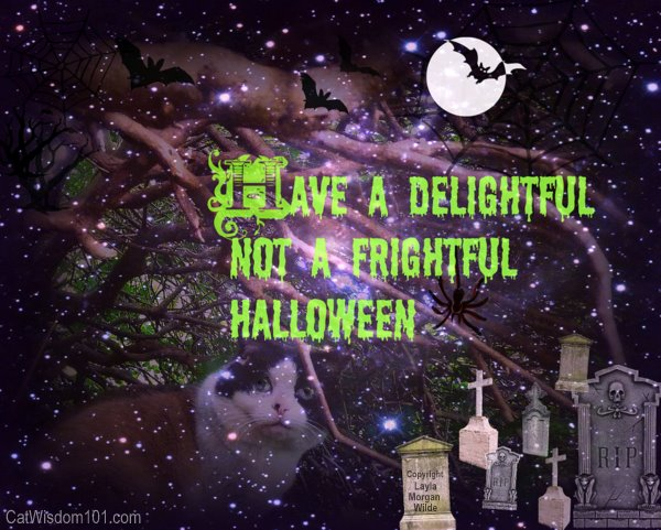 Cat-halloween-delight not frightful