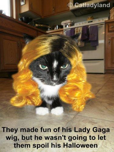 lady gaga funny cat wig cat wisdom 101 - Funny Cat Halloween