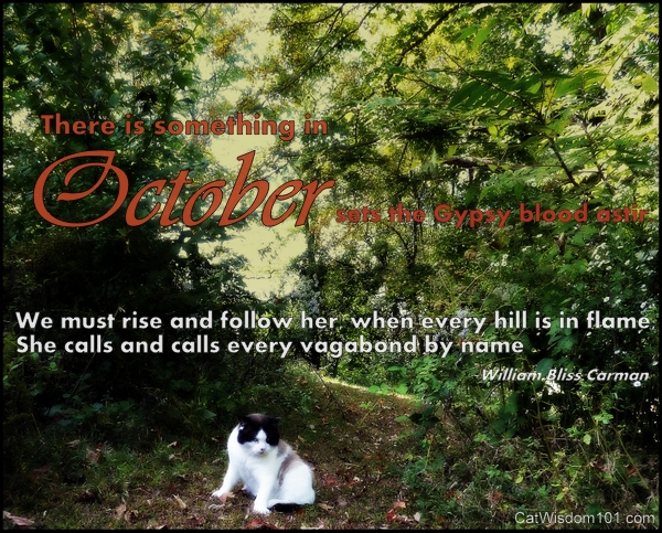 October-quote-garden-cat