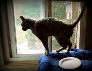 cat assistance-shelter-rescue-cat wisdom 101