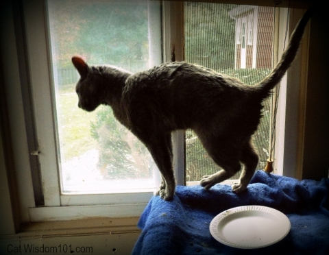 cat assistance-shelter-rescue-cat wisdom 101