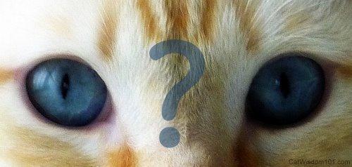 cat questions wallpaper