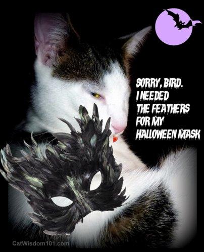 cat-feathers-halloween-mask-catwisdom101.com