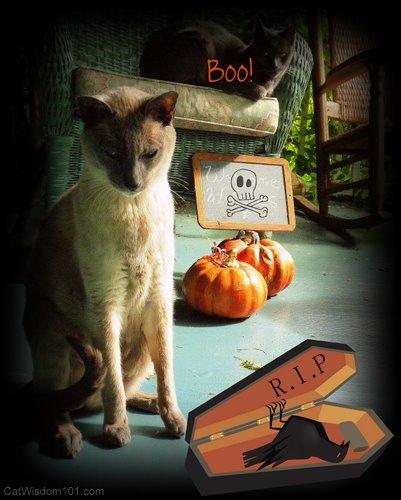 cat-halloween-bird