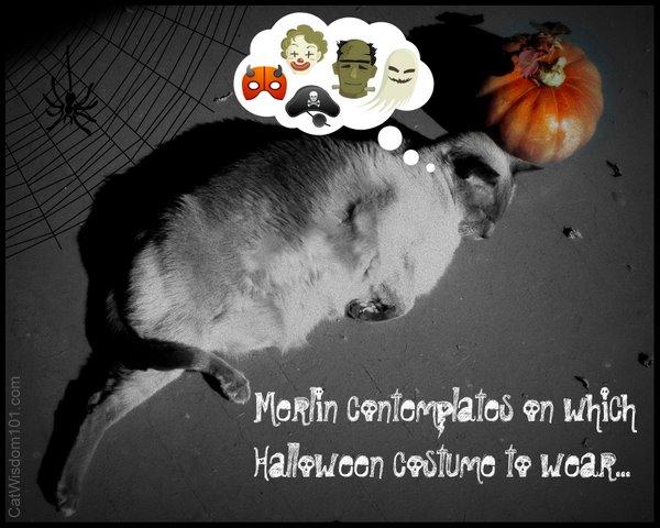 cat-halloween-humor-art