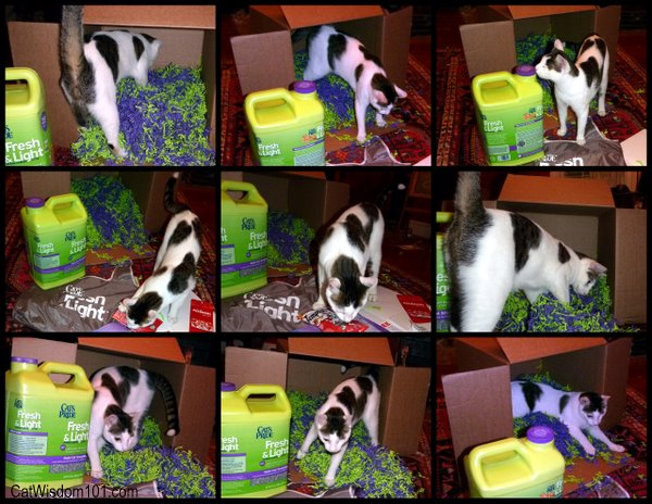 cat-playing box-fresh & light-cat wisdom101.com