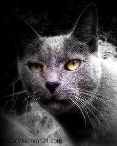 cat wisdom 101-gris gris
