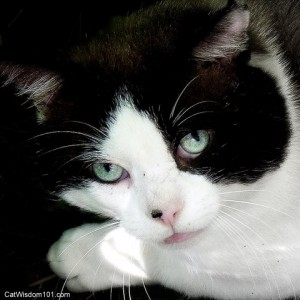 cats eyes-soul-portrait-art