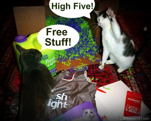 cat's pride-contest-fresh & clean-high five-cats-