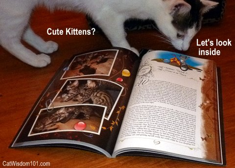 chronicles of zee & zoey-book review-catwisdom 101