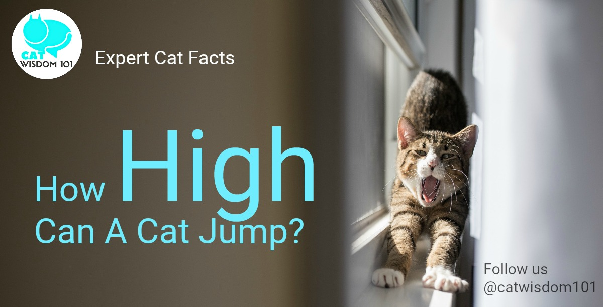expert_cat_facts_jump_catwisdom101