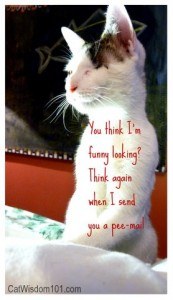 funny-cat-pee-mail