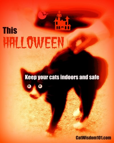 halloween-cat-safety-poster-cat wisdom 101