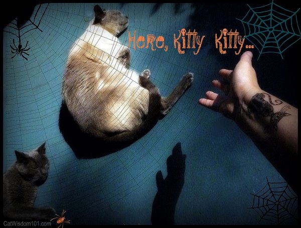 here kitty kitty-cats-halloween-cattoo-