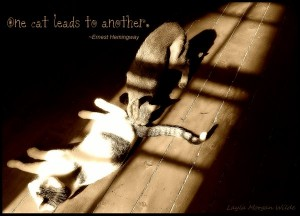 one cat leads to another-hemingway-quote-cat wisdom 101