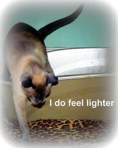 fresh & clean litter-cat wisdom 101